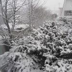 32.1週間のお弁当☆雪が降ったよ♪