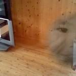 心霊写真っ?!3DSカメラ機能に本気でビビる。。(笑)