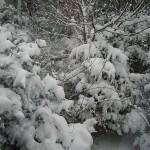 雪の季節到来☆